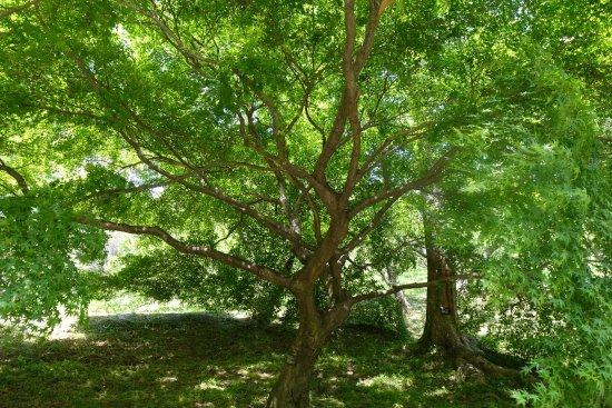 Handayama Botany: 緑の木陰に癒されます
