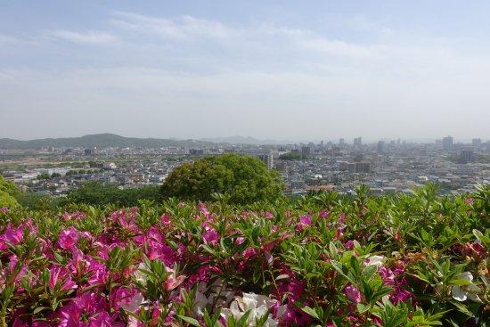 Handayama Botany: 燃えるようなツツジの向こうに岡山市街が見渡せる