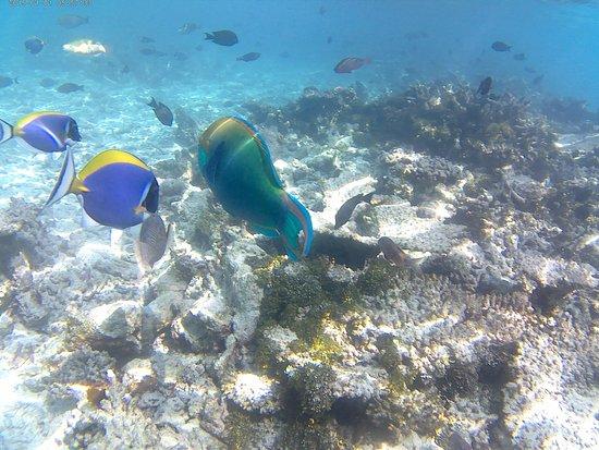 Bilde fra Thulhagiri Island Resort