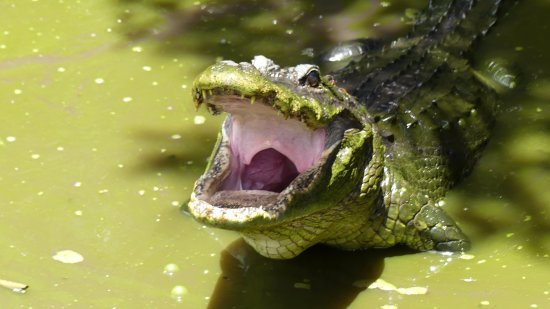 Tigertail Airboat Tours Miami