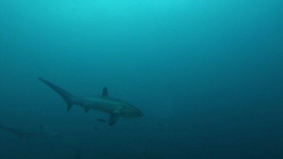 Malapascua Exotic Diving Center: photo8.jpg