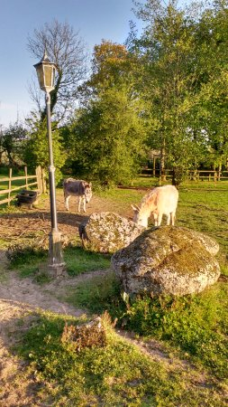 Callington, UK: Friendly donkeys on site :)