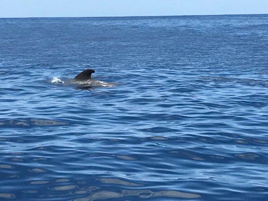 Blue Jack Sail: photo2.jpg