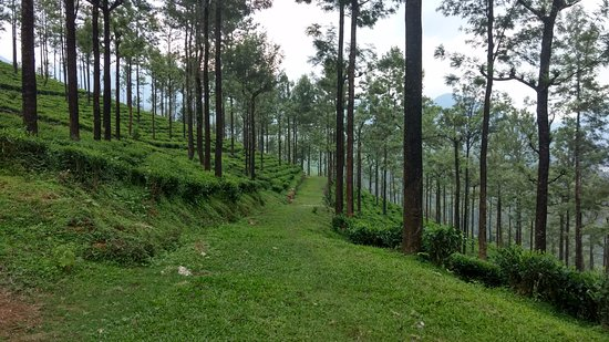 Peaceful, Colonial Plantation Bungalow