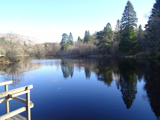 Taynuilt, UK : The Lily pond at Inverawe
