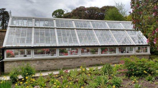 St Austell, UK: Victorian glasshouse