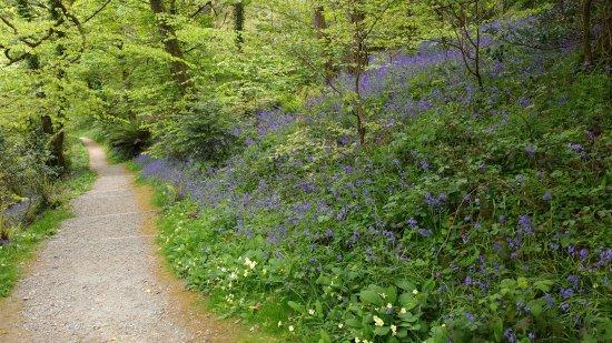 St Austell, UK: Bluebell woods