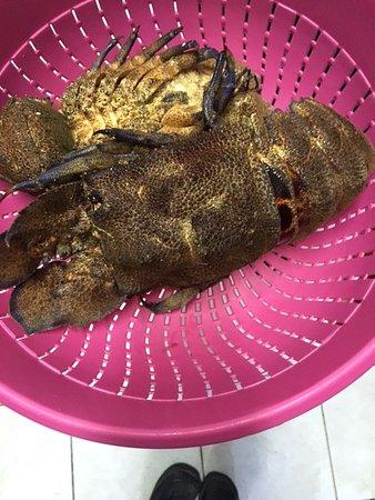Κυρά Παναγιά, Ελλάδα: Fresh alive slipper lobster (local name - Karavida)