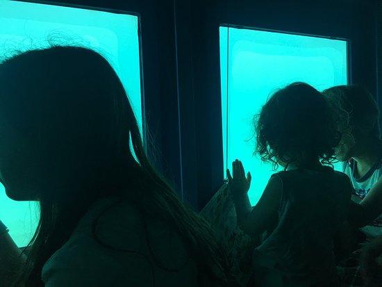 Yellow Submarine: photo0.jpg