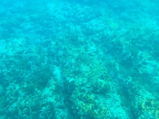 Yellow Submarine: photo2.jpg