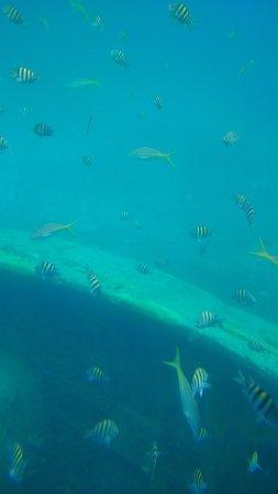 Yellow Submarine: photo3.jpg