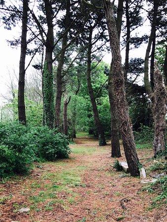 Flamanville, Frankrike: Une promenade en forêt?