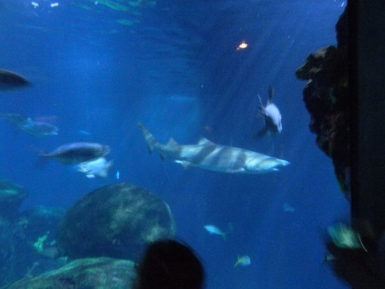 Picture Of Tennessee Aquarium Chattanooga