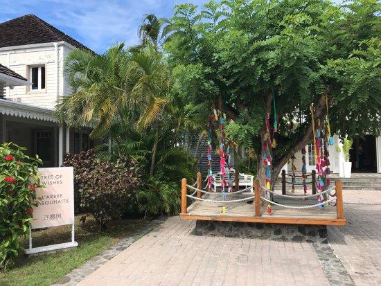 L 39 arbre souhaits foto lux saint gilles saint gilles les bains tripadvisor - L arbre a souhait ...