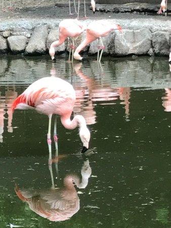 写真こども動物自然公園枚