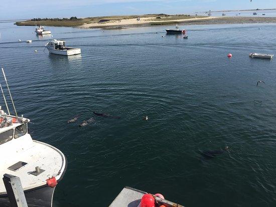 Captain Tom Lawrence House Inn: Seal spotting in Chatham