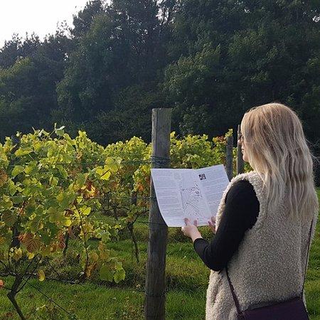 Sedlescombe Organic Vineyard: Self-guided Vineyard & Woodland Nature Trail