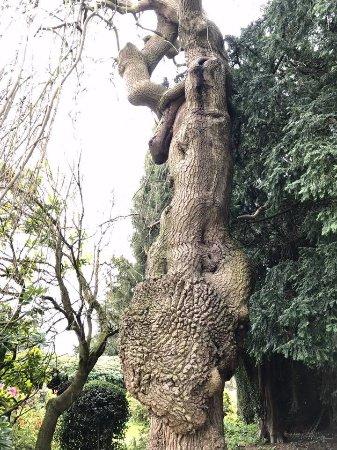 Woodhouse Eaves, UK: Long Close
