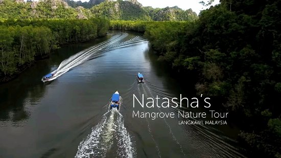 Natasha's Mangrove Nature Tour