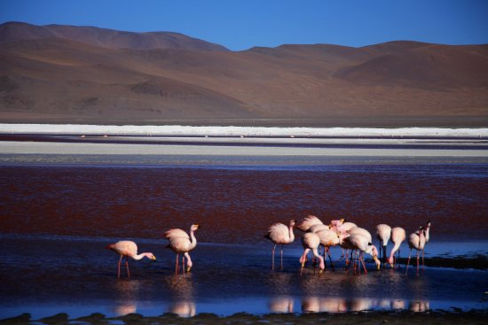 Tupiza Tours: Flamencos en la laguna Colorada