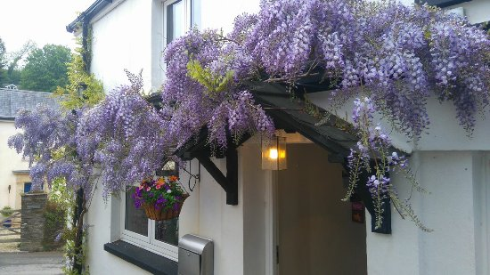 Cornworthy, UK: Wisteria