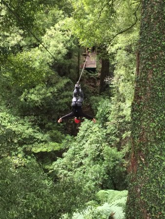Rotorua Canopy Tours: My husband, who obviously is not afraid of heights, zipping upside down!