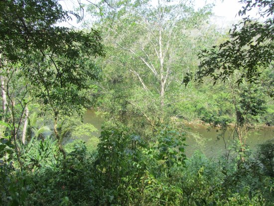 Table Rock Jungle Lodge : The Mecal River