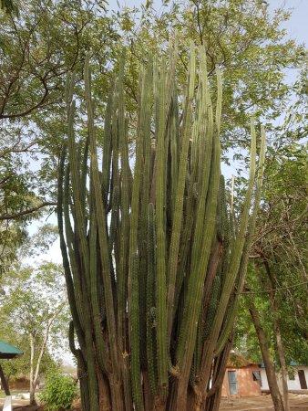 Pendjari National Park, Benin: espace jardin