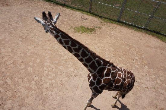 NEW Zoo & Adventure Park: The NEW Zoo