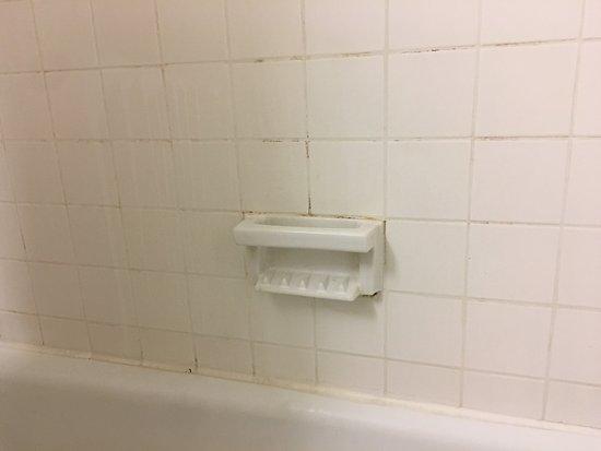 Comfort Inn Conference Center: Moldy tile