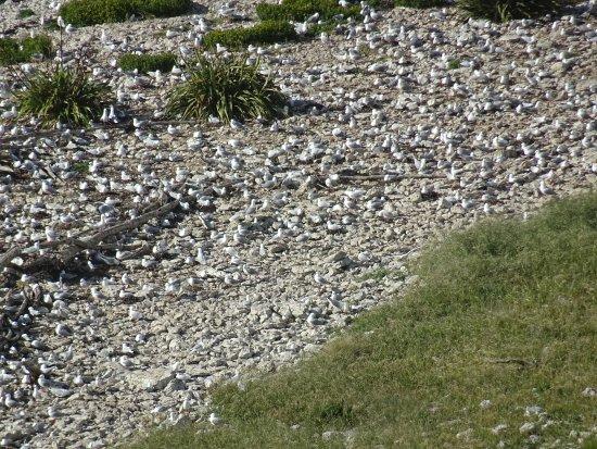 Kaikoura, New Zealand: Bird Colony