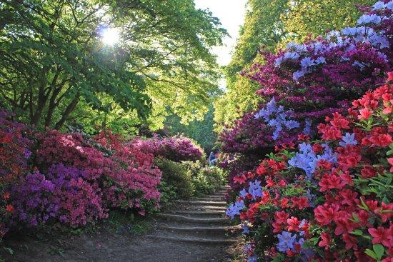 Azalea Steps at Winkworth Arboretum