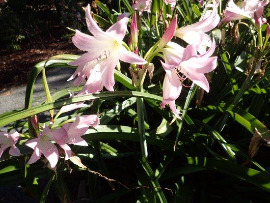 Loveliness at the Americus Garden Inn