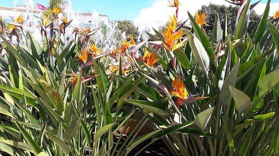 Zdjęcie Marbella Playa Hotel