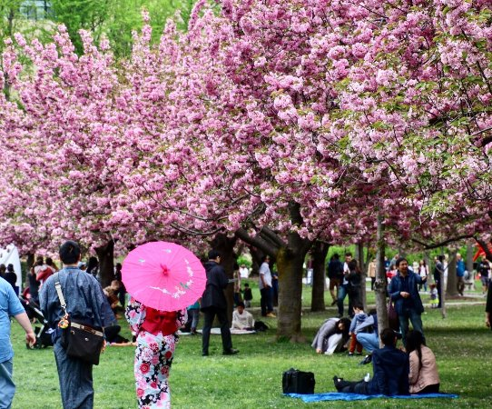 Sakura Festival Picture Of Brooklyn Botanic Garden Brooklyn Tripadvisor