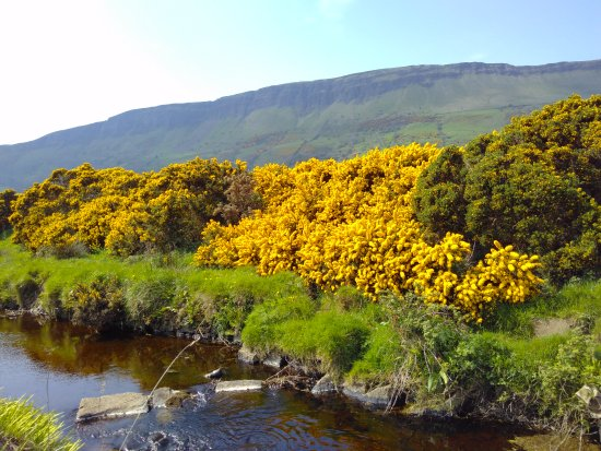 Glenariff, UK: Gorse Bloom