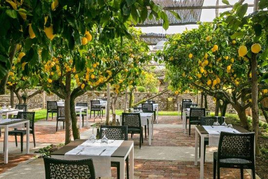 Lemon Tree Garden Picture Of La Zagara Anacapri Tripadvisor