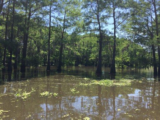 Mequet Swamp Tours: photo1.jpg