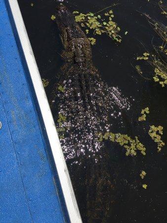 Mequet Swamp Tours: photo2.jpg