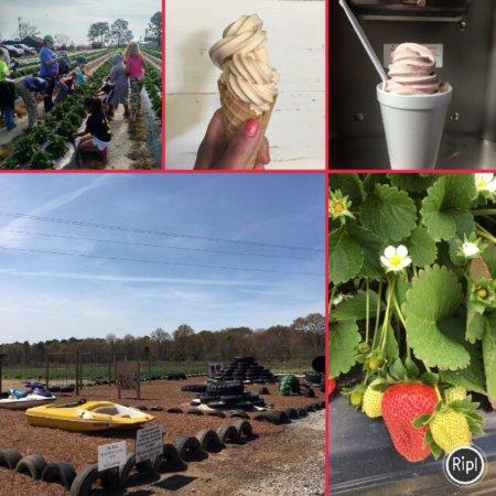 Enigma, GA: Southern Grace Farms