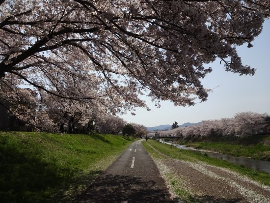 Cherry Trees along the Minamiasa River bank