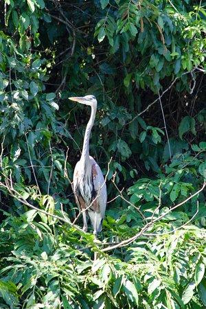 Punta Gorda, Belize: Birdwatchers paradise!