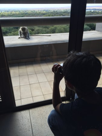 Elephant Hills Resort: Our son watching the monkey on the balcony from inside the room through the binoculars!