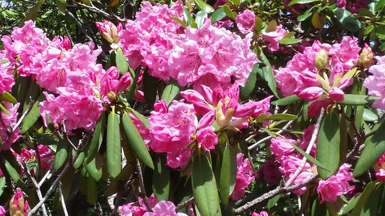 Heritage Museums & Gardens: May 6 2017