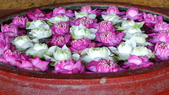 Anise Hotel: Lotus flowers at the entrance