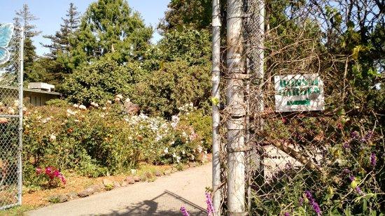 Lakeside Park And Garden Center Oakland Ca Top Tips Before You Go With Photos Tripadvisor