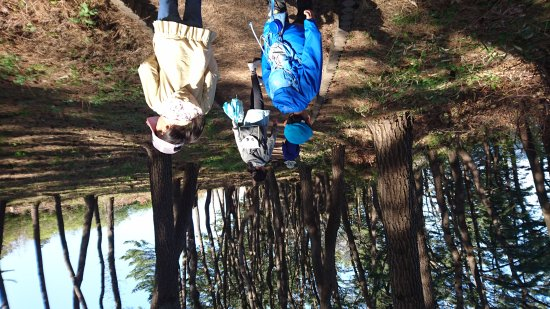Yodo Pine Grove