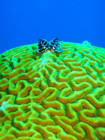 Punta Gorda, Belize: Magnificent coral growth!