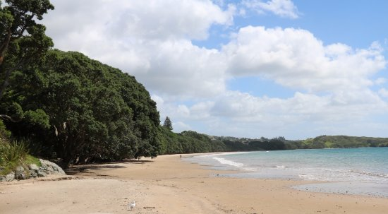 Mangonui, New Zealand: Coopers Beach 1