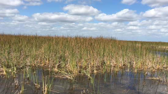 Weston, FL: More sawgrass...